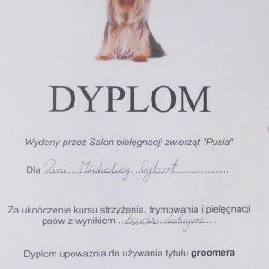 groomer-gliwice-dyplom-2